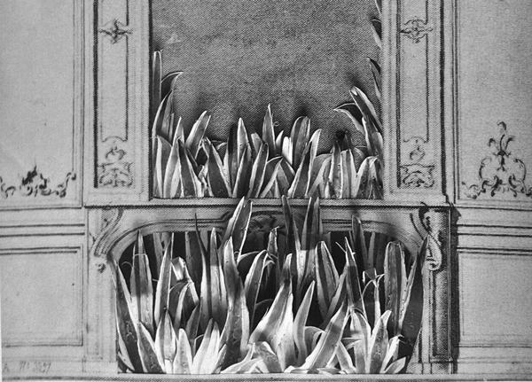 agaves-detail