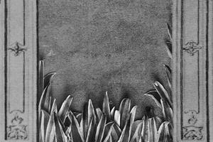 agaves thumb